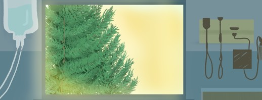 One White Pine: Building Spaces for Living & Healing image
